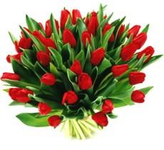 08-kwiaty-na-dzien-kobiet